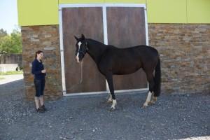 Bilder Pferde Mai 2014 275